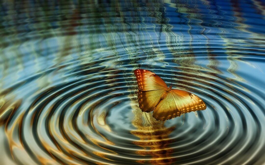 Growing our Quantum Butterfly Wings: Moving forward into change